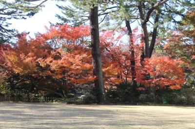 紅葉・東京都庭園美術館