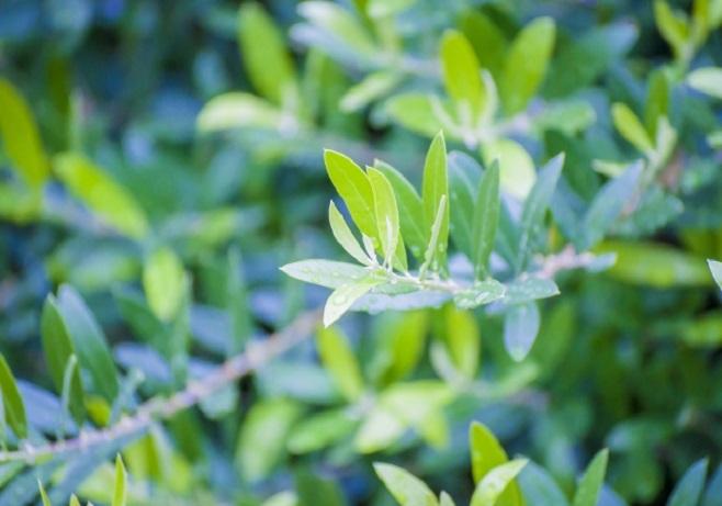 賃貸マンション 植栽について